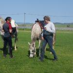 Du Vlei Farmstall & Restaurant & horses